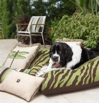 The Right Pet-Friendly Furniture - Today's Patio