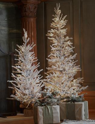 4.5' to 5.5' Christmas Trees