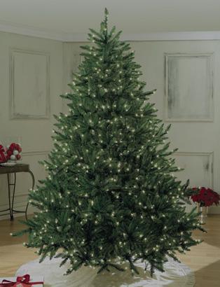 6' to 6.5' Christmas Trees