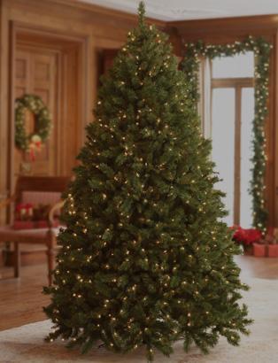 8' to 8.5' Christmas Trees
